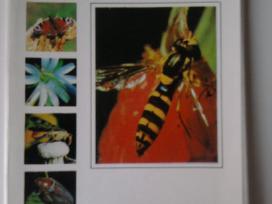 Vabzdžiai