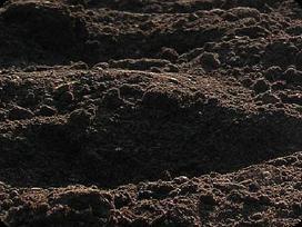 Zvyras, juodzemis, smelis, skalda, molis, gruntas
