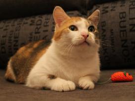 Dovanojama sterilizuota katytė