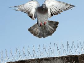 Apsaugos nuo paukščių