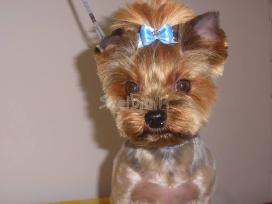 Doggy days, šuniukų grožio salonas klaipeda - nuotraukos Nr. 2