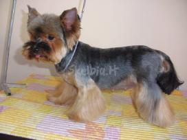 Doggy days, šuniukų grožio salonas klaipeda - nuotraukos Nr. 3