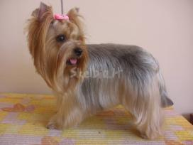 Doggy days, šuniukų grožio salonas klaipeda - nuotraukos Nr. 5