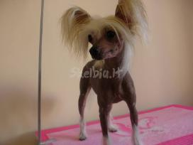 Doggy days, šuniukų grožio salonas klaipeda