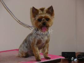 Doggy days, šuniukų grožio salonas klaipeda - nuotraukos Nr. 8