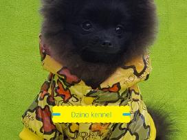 Gražiausias Lietuvoje juodas Boo Meškiukas