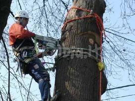 Pavojingų medžių genėjimas ir šalinimas