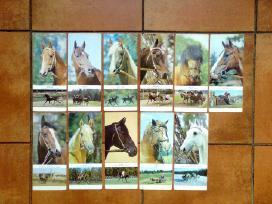 Rusu arkliu veisles 1972 metai