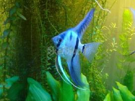 Akvariumai - nuotraukos Nr. 5