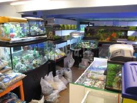 Akvariumai - nuotraukos Nr. 7