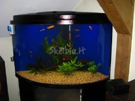 Jūriniai ir gėlavandeniai akvariumai Klaipėdoje