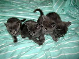 Bagira turi 5 mažylius Visi Užsakyti