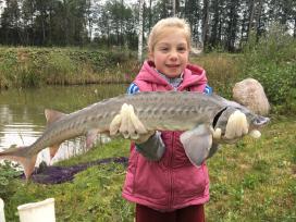 Žuvys: parduodame erškėtus įžuvinimui