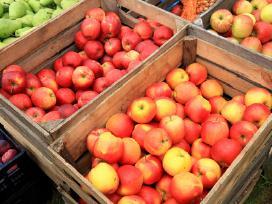 Obuoliu supirkimas Superkame obuolius
