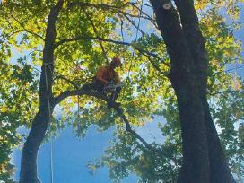 Pavojingų medžių pjovimas/genėjimas