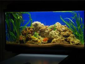 Padovanoti ar uz nedidele kaina akvariuma
