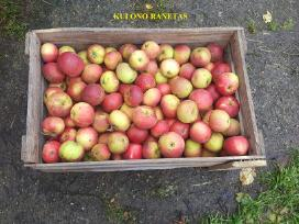 Parduodami ekologiški obuoliai