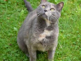 Sočių namų ir jūsų šiltų rankų prašosi katytė Bala