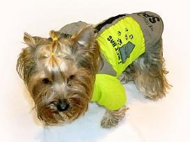 Išpardavimas- šunų rūbai