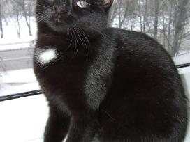 Dovanojama katytė 1,5 metu.