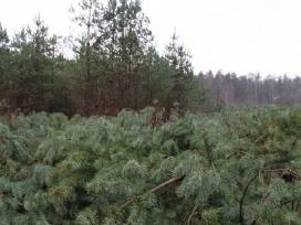 Biokuras. Krūmų ir miško kirtimas. Apleistų sklypų - nuotraukos Nr. 2