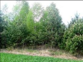 Krūmų ir miško kirtimas