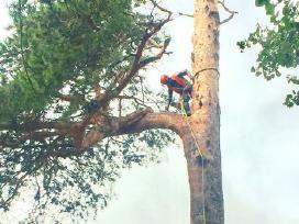 Medžių pjovimas, genėjimas