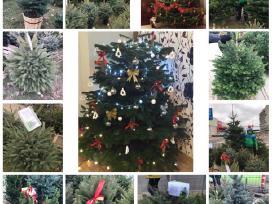 Prekyba Kalėdiniais medeliais