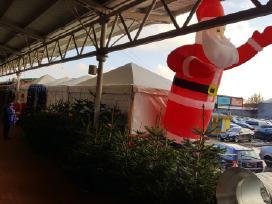 Nemokamai Kalėdų Eglutės tik šiandien