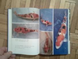 """Bernhard Teichfischer """"farb-karpfen"""" 1988 - nuotraukos Nr. 4"""