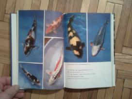 """Bernhard Teichfischer """"farb-karpfen"""" 1988 - nuotraukos Nr. 5"""