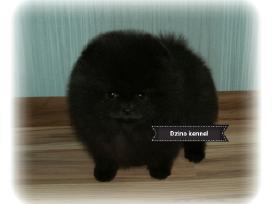 Gražiausias Lietuvoje juodas Boo Meškiukas - nuotraukos Nr. 4