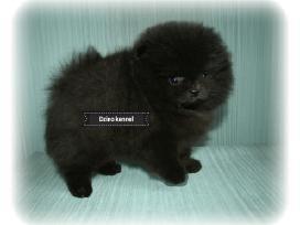 Gražiausias Lietuvoje juodas Boo Meškiukas - nuotraukos Nr. 5
