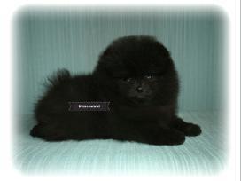 Gražiausias Lietuvoje juodas Boo Meškiukas - nuotraukos Nr. 6