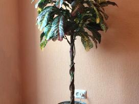 Tvarkinga dirbtinė gėlė su vazonu. Kaina: 55 eurai