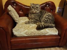Derantys prie interjero baldai šunims katėms