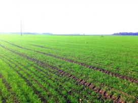 Ūkininkas ieško išsinuomoti žemę