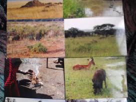 Kenija laukinė gamta