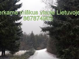 Perku mišką visoje Lietuvoje.