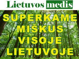 """""""Lietuvos medis"""" brangiai perka ivairius miskus"""