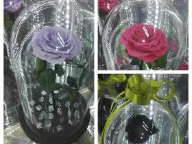 """Mieganti rožė,rožės """"mažasis princas"""", roze kupole"""