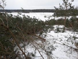 Nemokamai Valome miškus , išvartas
