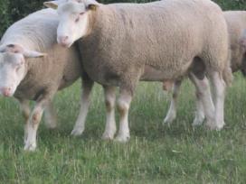 Arūno Avys