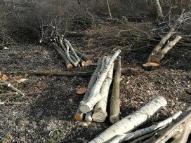 Medžių pjovimas,genejimas,kelmų rovimas, išvežimas - nuotraukos Nr. 7