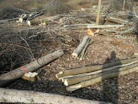Medžių pjovimas,genejimas,kelmų rovimas, išvežimas - nuotraukos Nr. 8
