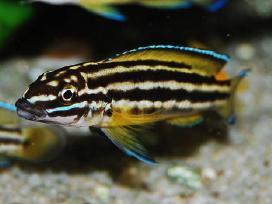 Įvairios žuvytės, pigiau - nuotraukos Nr. 2