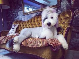 Doggy days, šuniukų grožio salonas klaipeda - nuotraukos Nr. 9