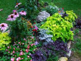Dekoratyvinius augalus