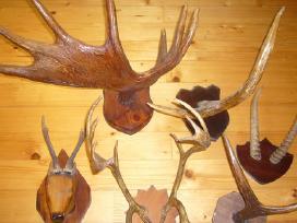 Ragų kolekcija