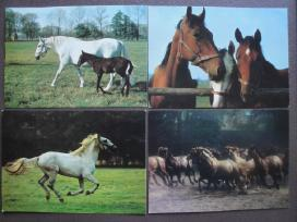 Arkliai